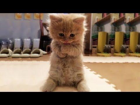 Katzenvideo Lustig