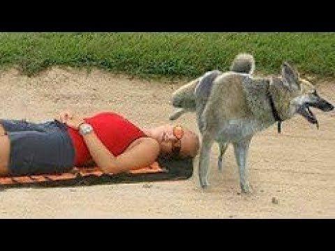 VERSUCHE NICHT ZU LACHEN EXTREM Schwer TIERE! Lustige Videos,Tiere,Lustige Challenge,Katze,Hund #17