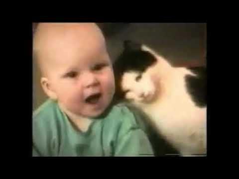 Lustige Katzen Videos zum totlachen versuche nicht zu lachen