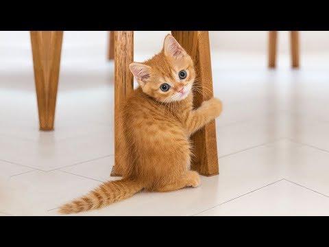 Die Besten Katzenvideos