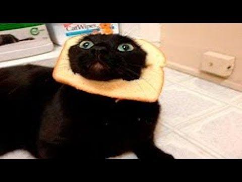 Tiere Zum Totlachen Versuche Nicht Zu Lachen Süße Und Lustige